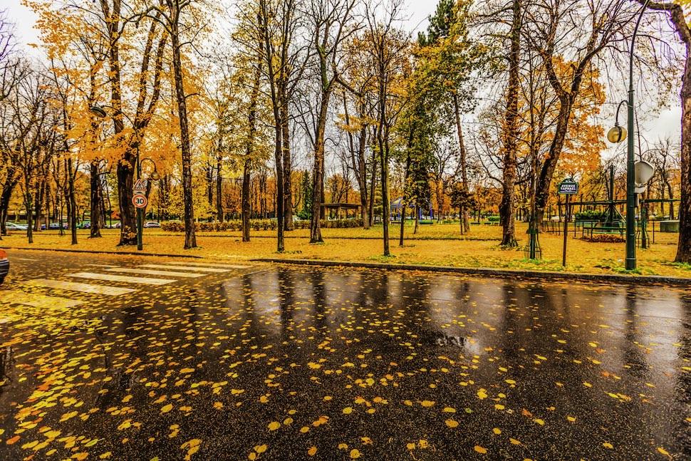 비 온 가을 파리 거리(출처: 위키미디어커먼즈 CC BY Valerii Tkachenko)